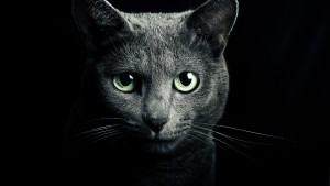 Black-cat-green-eyes-black-background_2560x1440